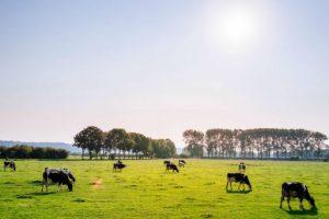 Umowa dzierżawy pola