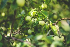 Posadzenie sadu owocowego na gruncie ornym wymaga zgody wydzierżawiajacego.