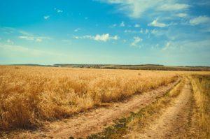 Dzierżawca jest zobowiązany do zapłaty podatku rolnego od nieruchomości.